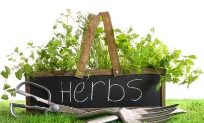 Create an Herb Garden